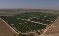 Israel-desierto-plantacion5