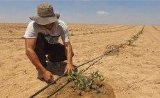 Israel-desierto-plantacion6