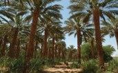Israel-desierto-plantacion7