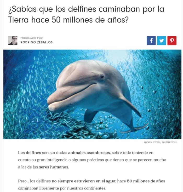 delfines-evolucion