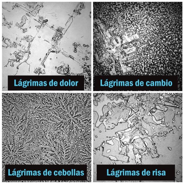 distintos-tipos-de-lagrimas-microscopio.jpg