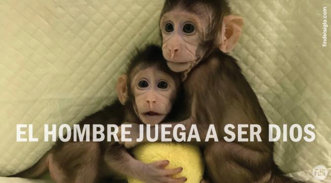 Científicos chinos clonan dos monos