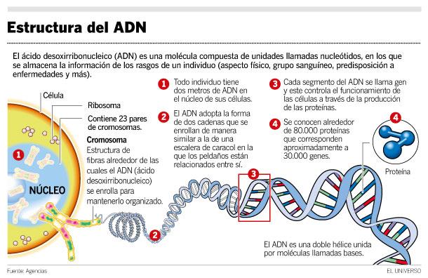 estructura_adn