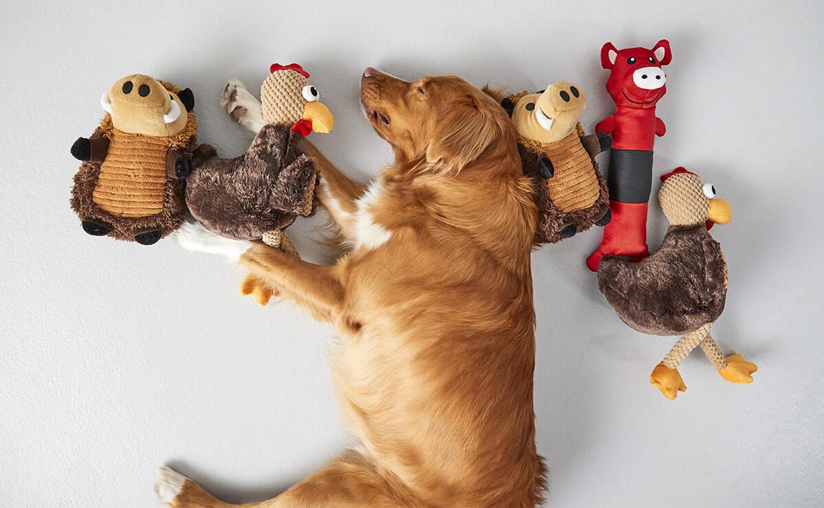 perro juguetes