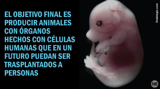 [Japón] Luz verde al experimento de un equipo de científicos para crear híbridos humano-animales