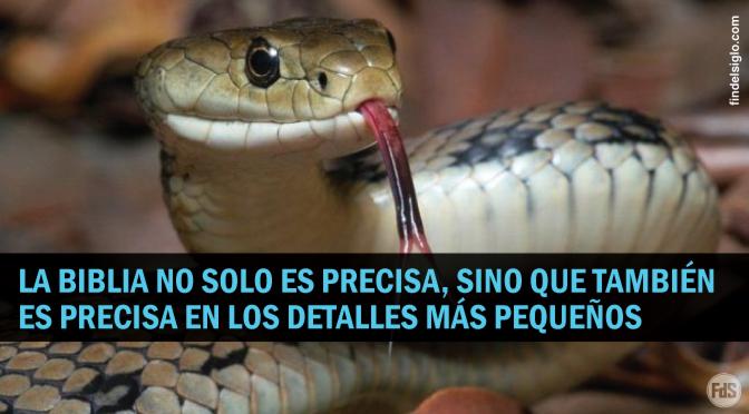 ¡Las serpientes comen polvo!