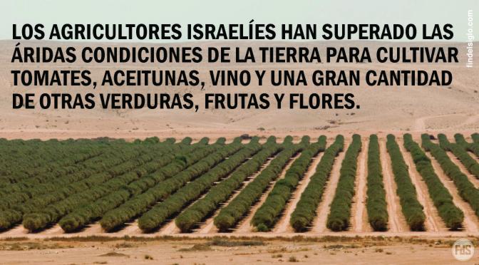 [Israel] Tomates son cultivados en el desierto
