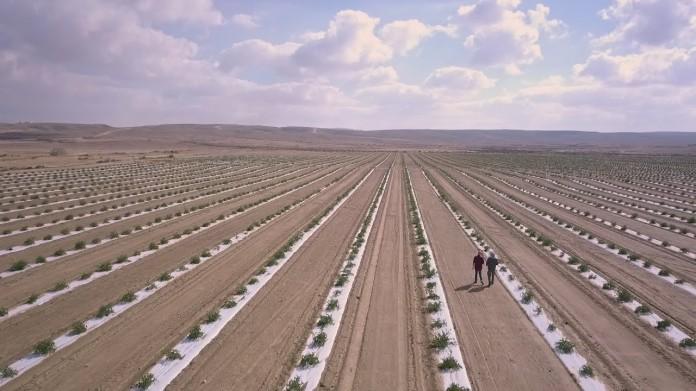 israel tomates en el desierto 2