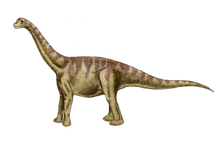 dinosaurio saurópodo